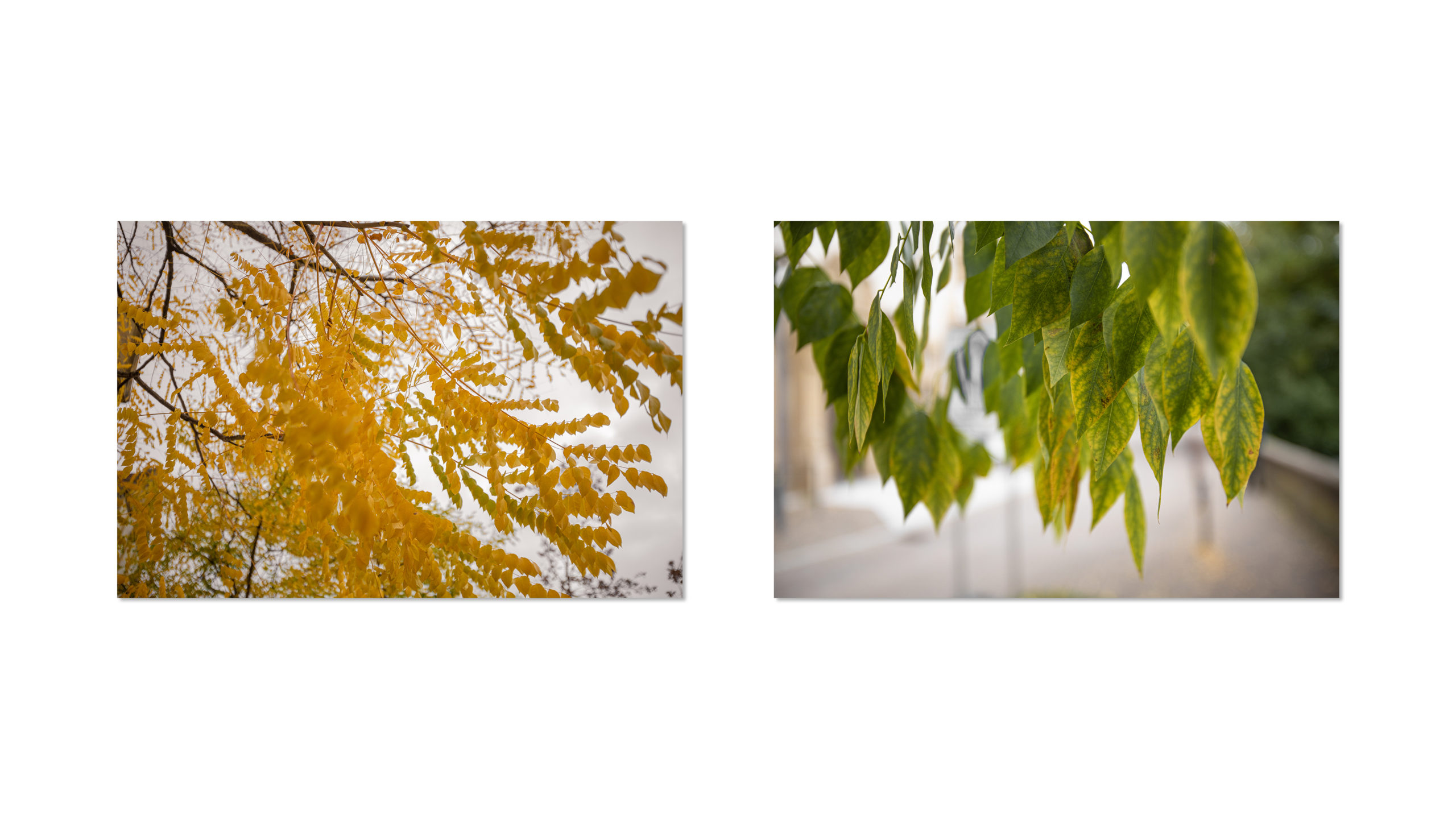 Goldener Herbst Fotos